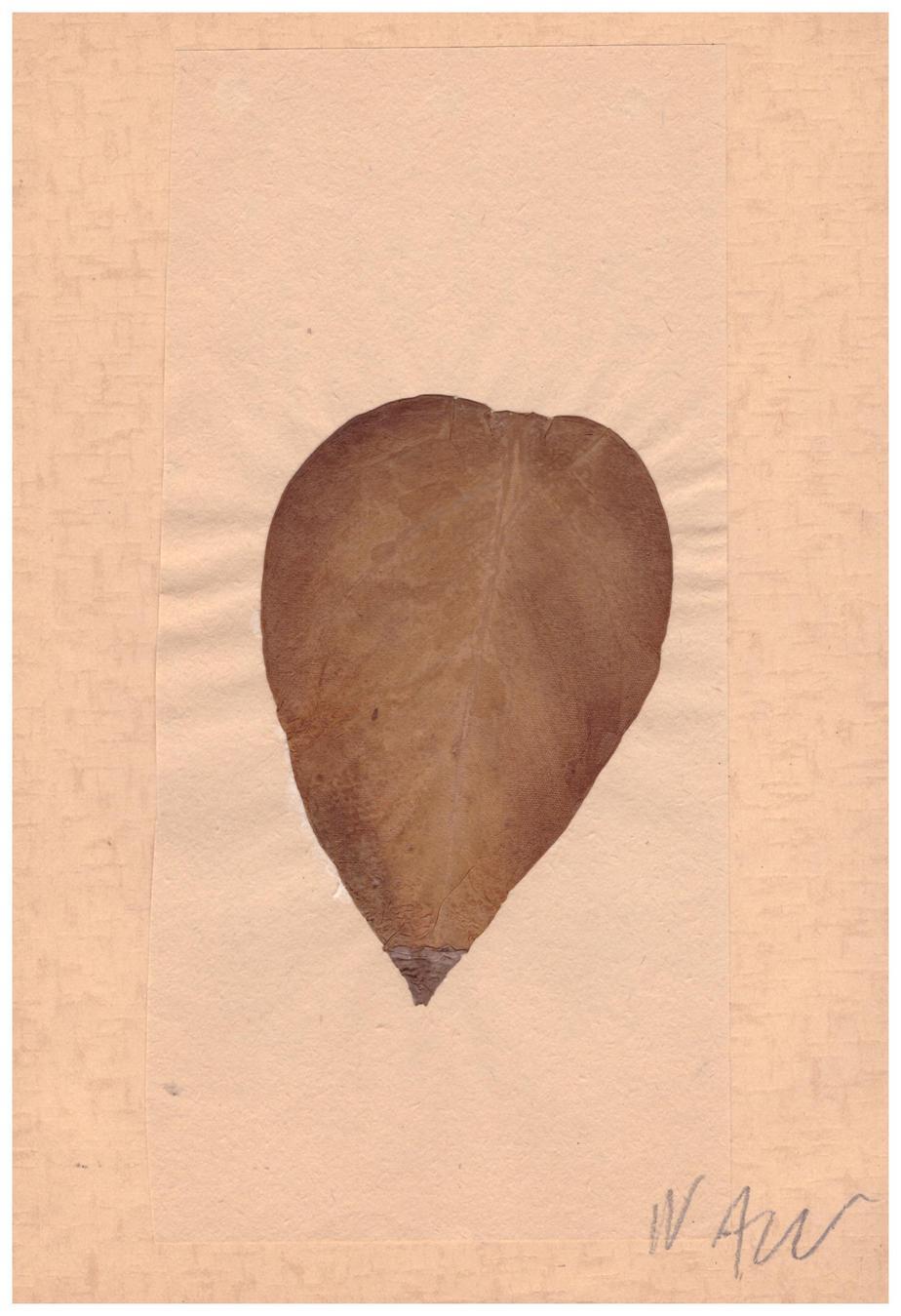 Nikos Alexiou Dried leaf, collage on paper 20.9 x 14.7 cm